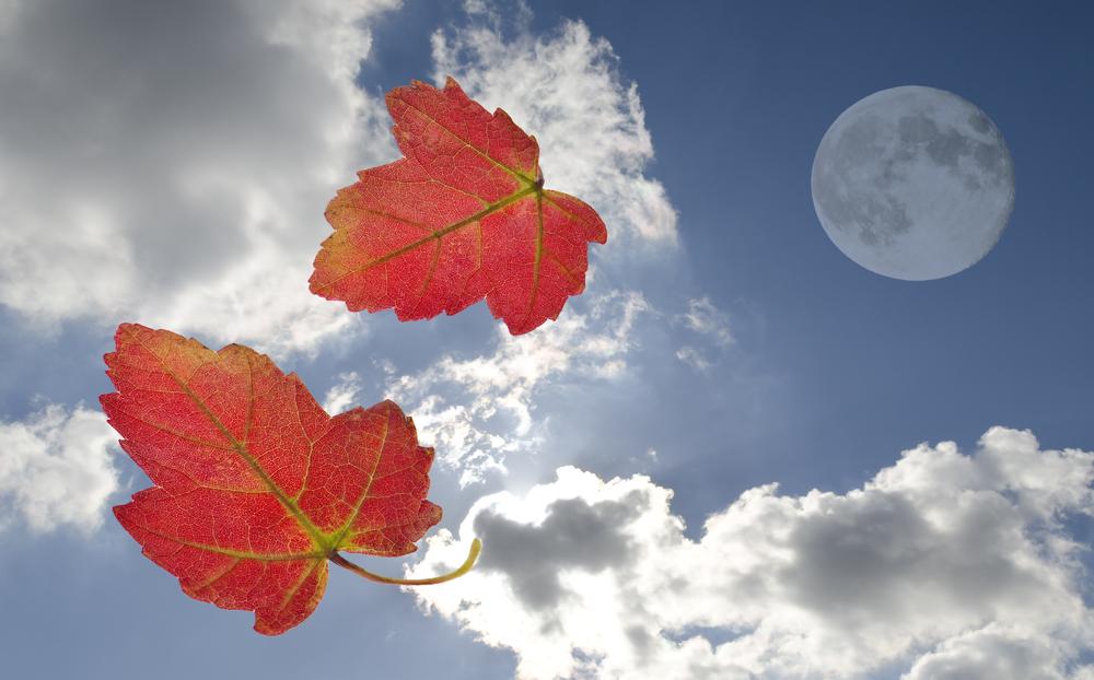 luna foglie