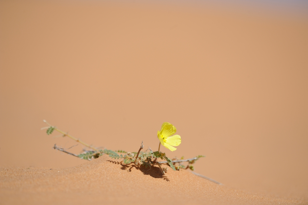 mongolia fiore
