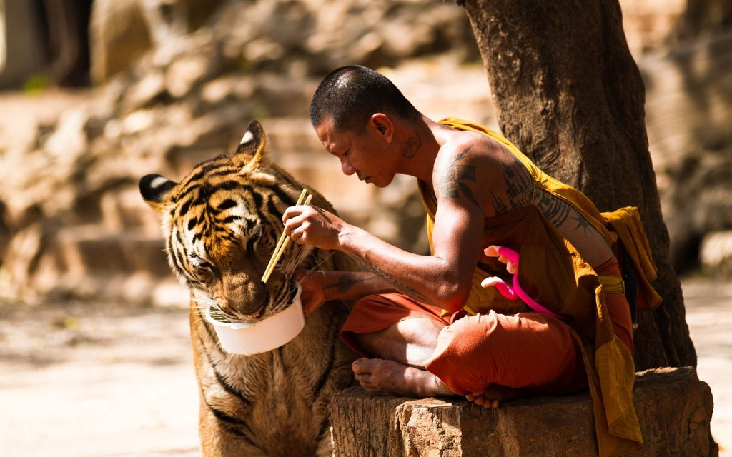 monk tiger uauuu