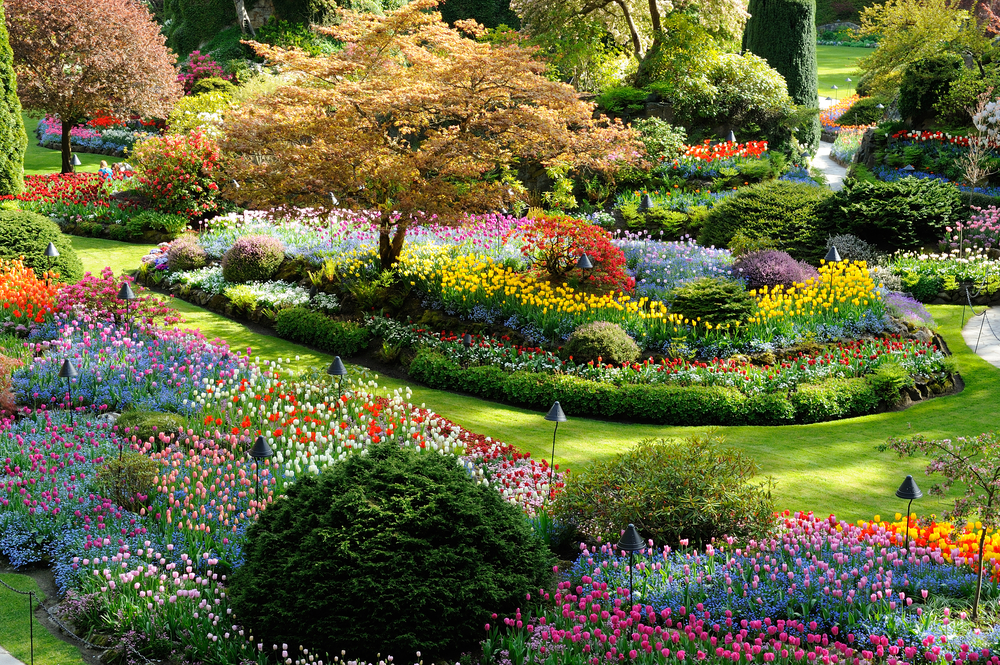 national historical site butchart garden in spring victoria british columbia canada