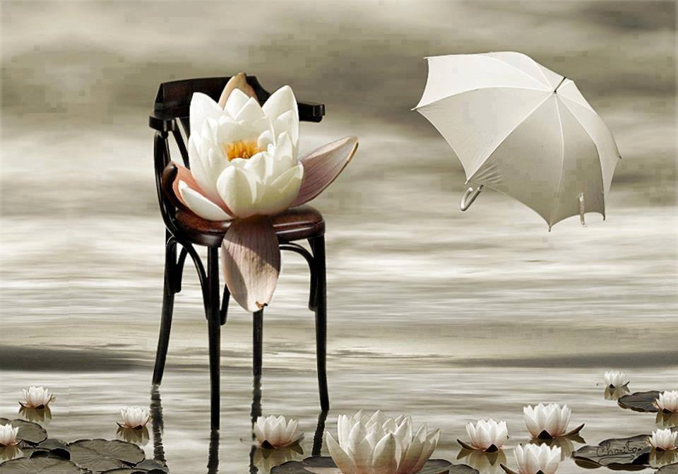 ombrelo ninfea fiore