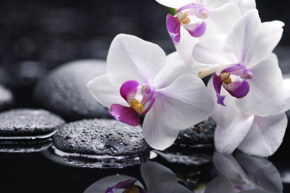 orchidea sri lanka7