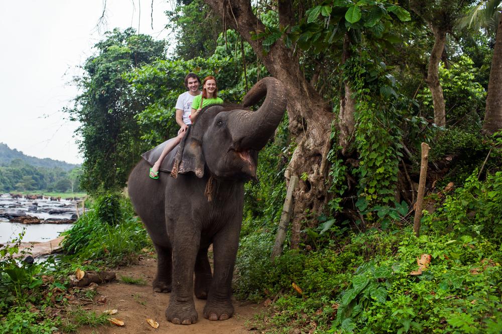 oung couple tourists to ride on an elephant in Pinnewala Sri Lanka