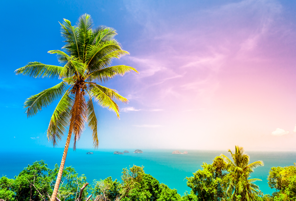 palma giamaica