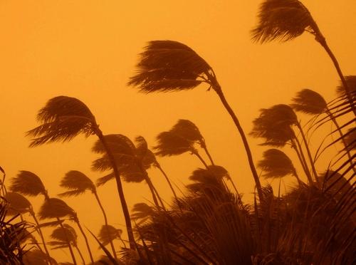 palme vento