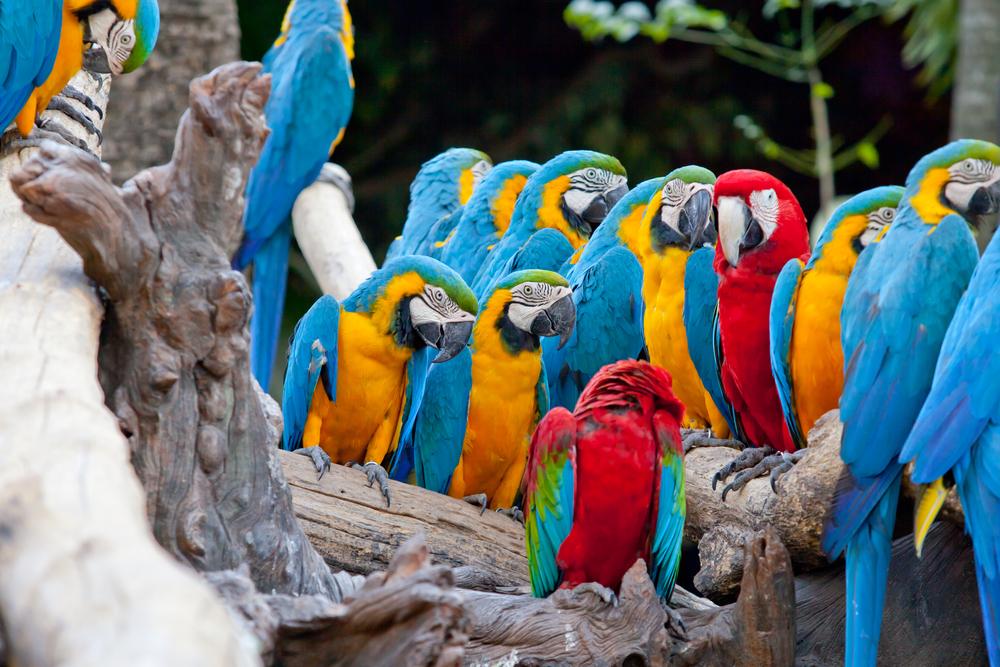 pappagalli costa rica