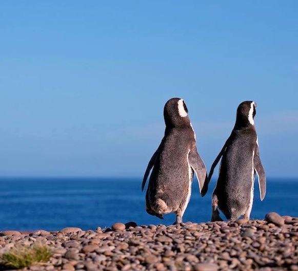 patagonia buondi