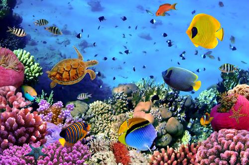 pesci belize