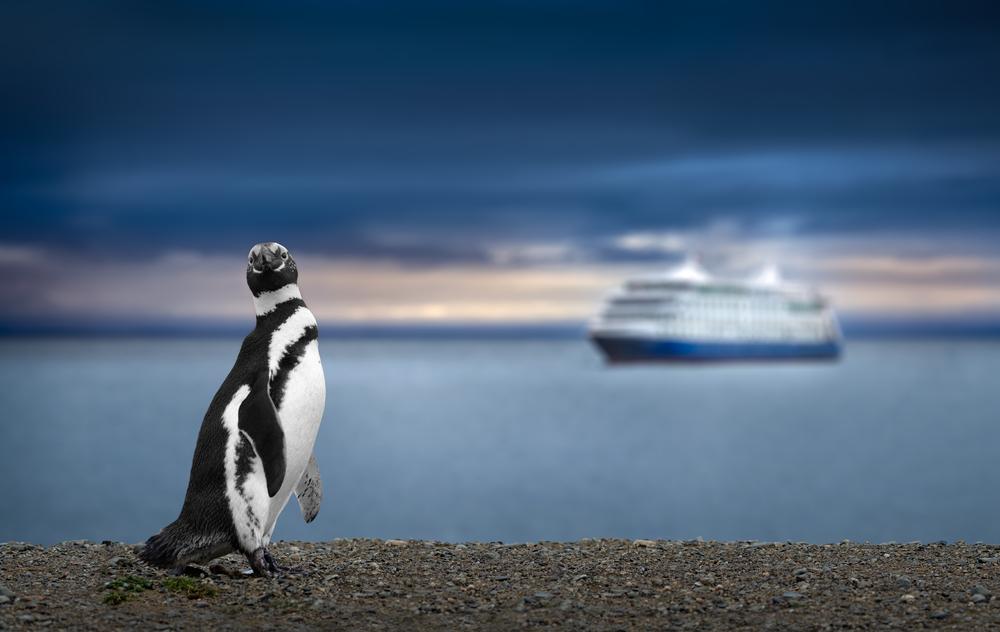 pinguini chile