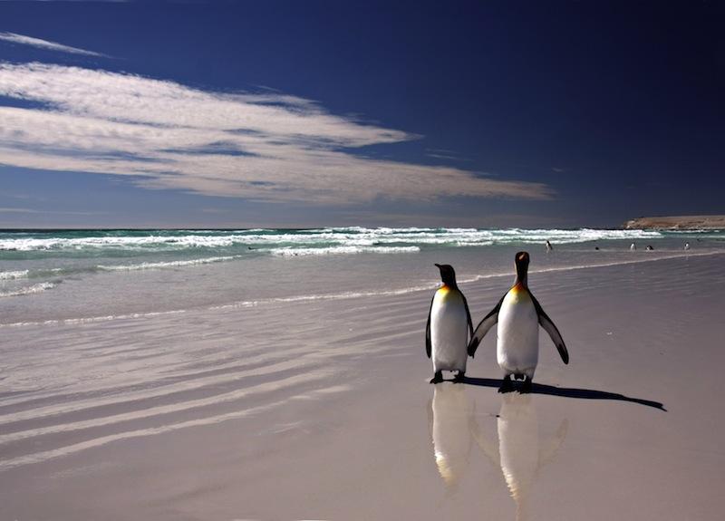 pinguini spiaggia