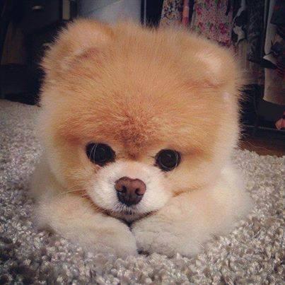 ponzi cane