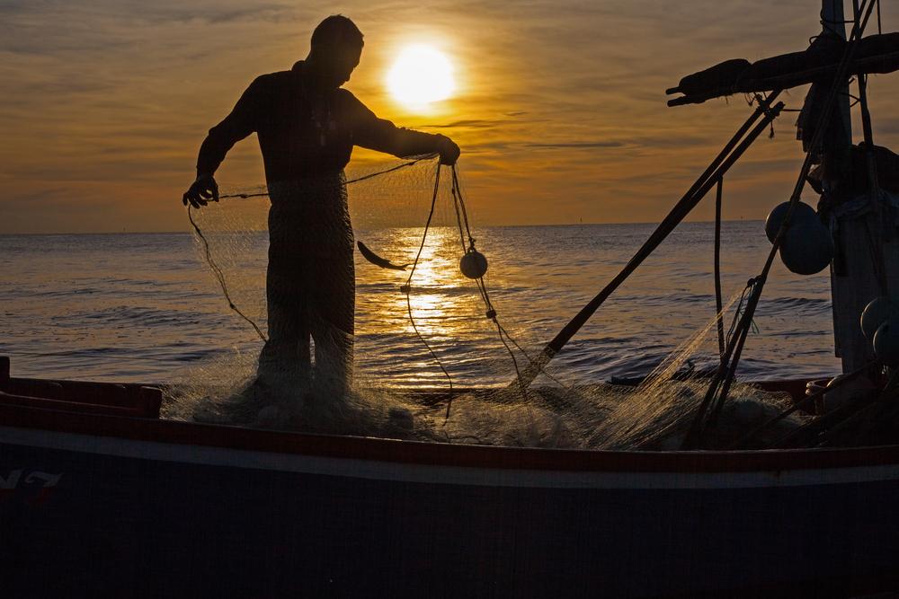 prunings networks fisherman