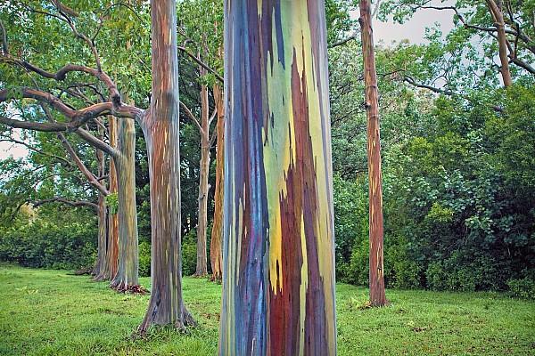 rainbow tree maui hawaii monica and michael sweet