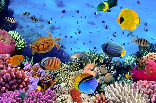 reef belize4