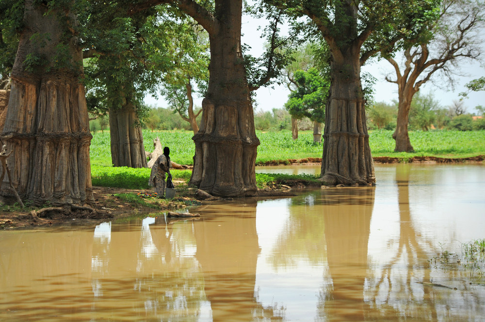 river with baobabs etiopia