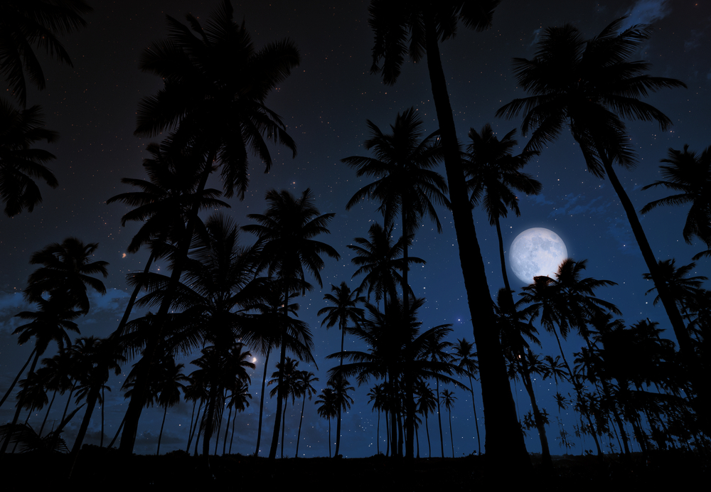 sPalm Trees under the moonlight and starry sky
