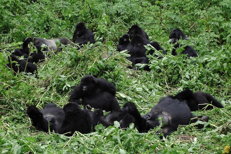 safari Rwanda gorilla