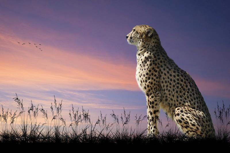 safari5_n