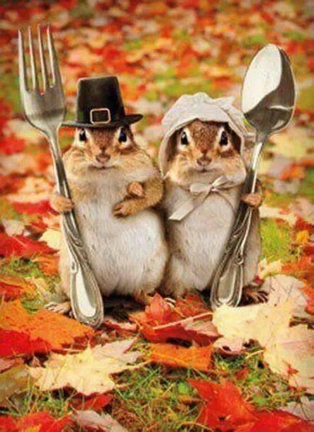 scoiattoli per agriturismi delle Rose