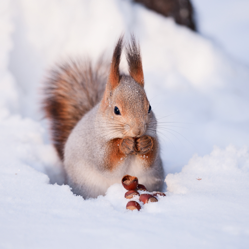 scoiattolo pranzo