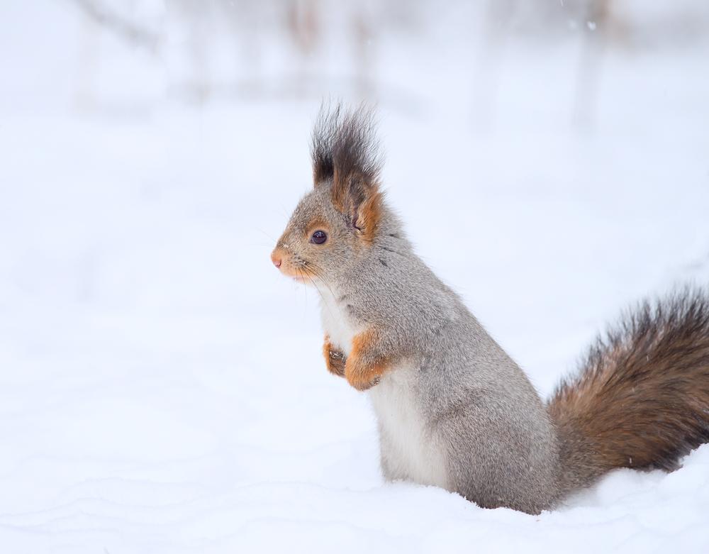 scoiattolo spaventato