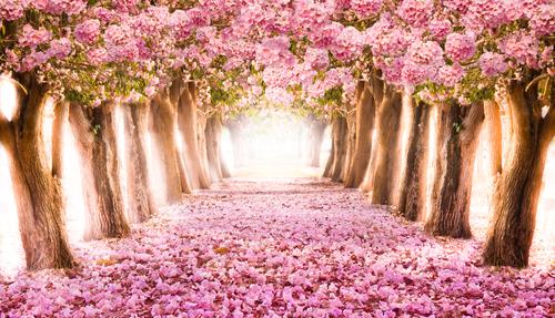 sentiero rosa