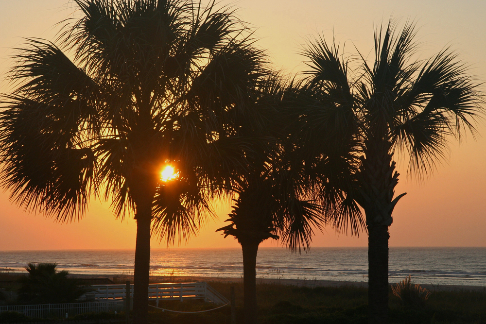 south carolina palme