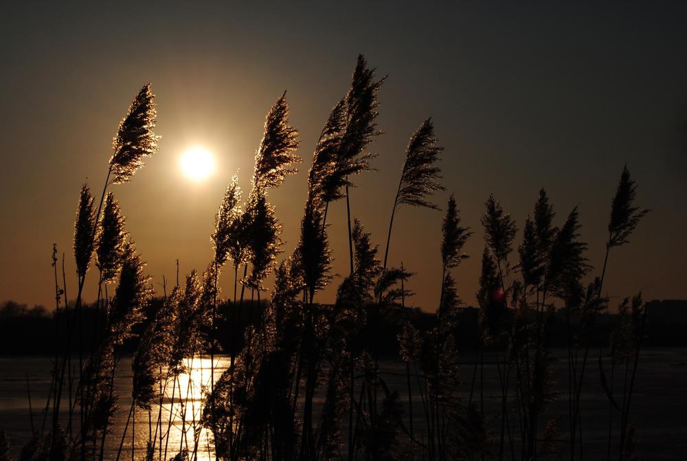 spighe tramonto