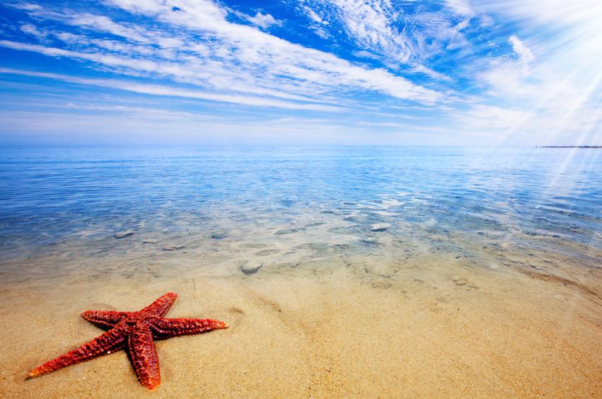 starfish stella marina