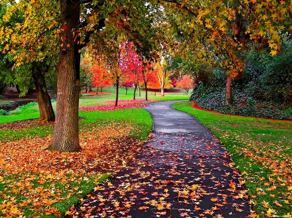 strada foglie
