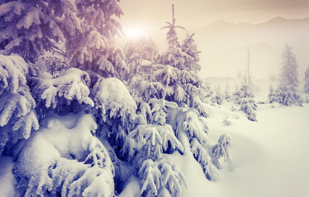 svizzera alberi neve