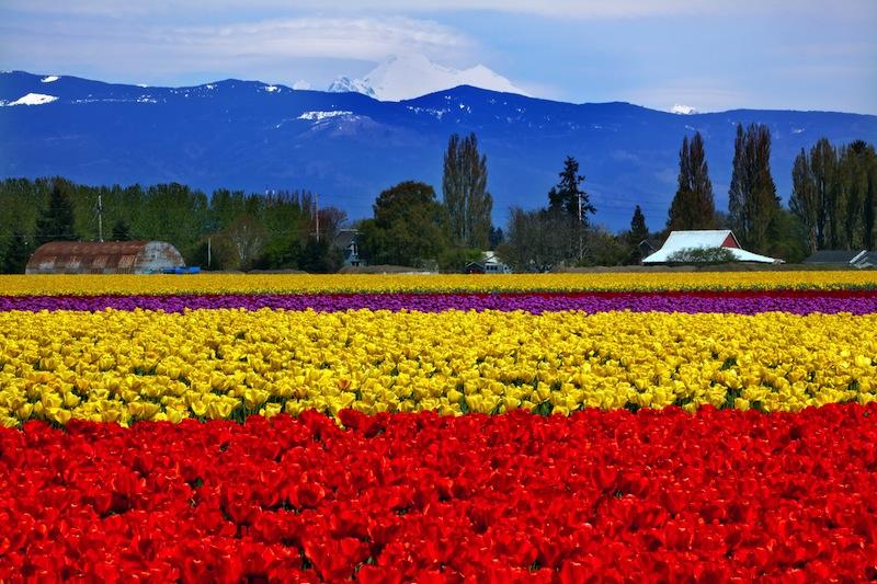 t Valley Farm Washington State Pacific Northwest