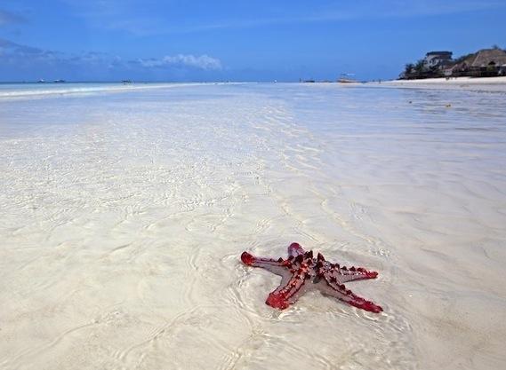 t Zanzibar beach in Tanzania