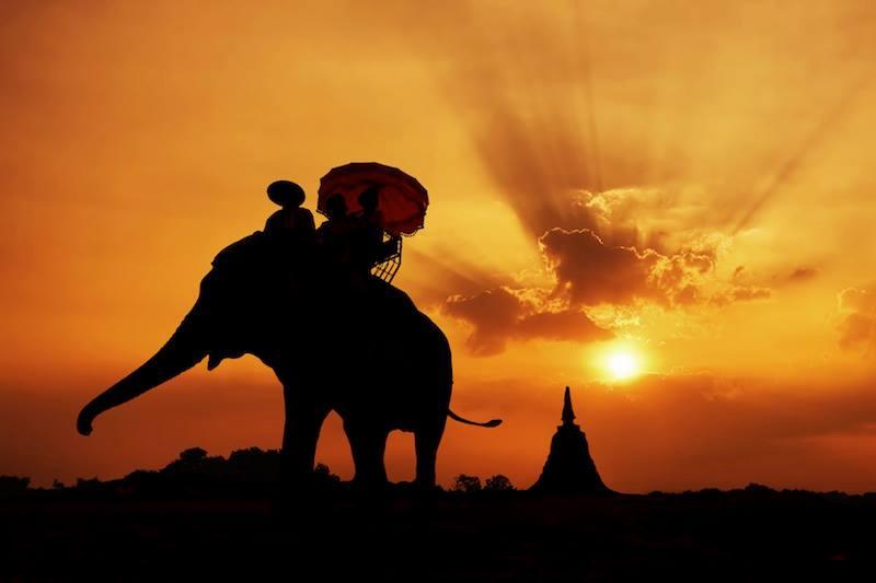 tailandia elefante