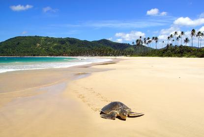 tartaruga mauritius