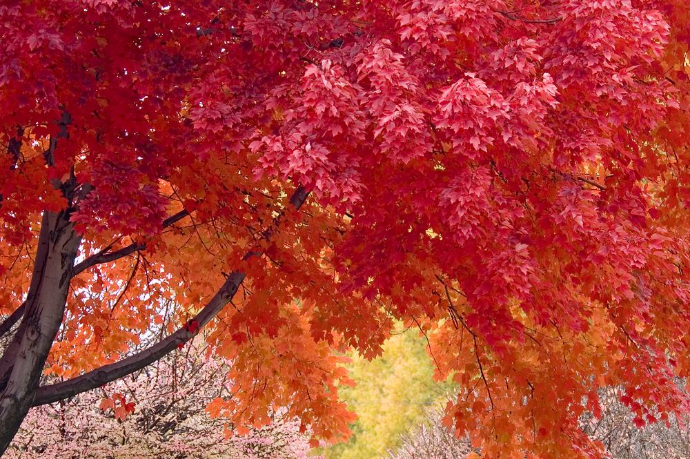 tasmania autunno