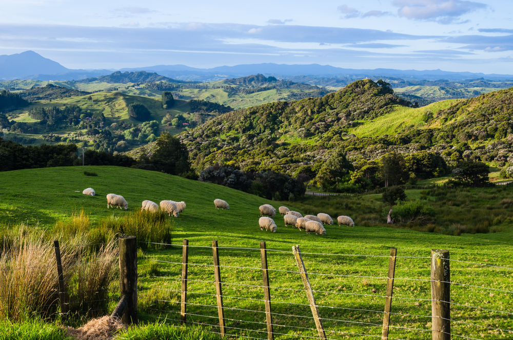 the north island of New Zealand