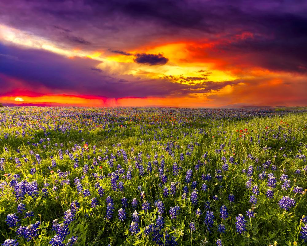 tramonto texas