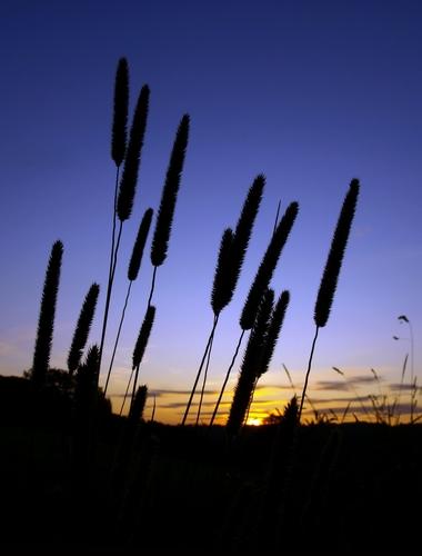 tramontp3