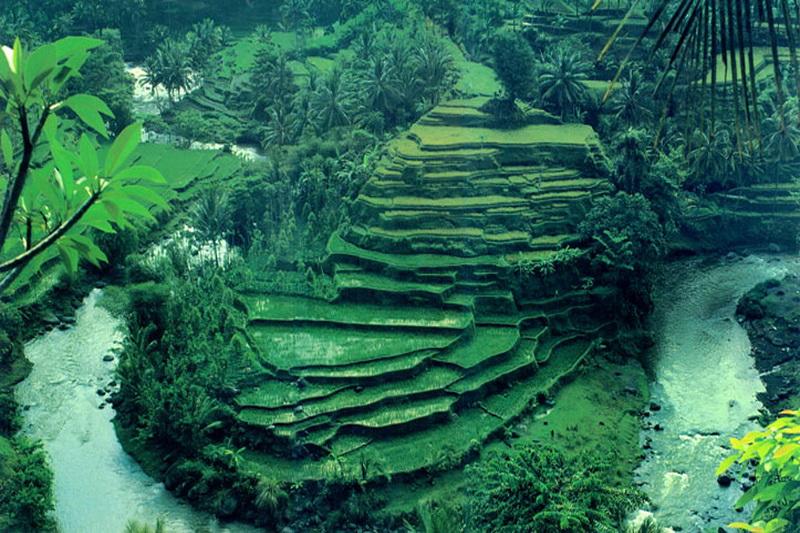 ubud bali ubud indonesia bali ubud nature