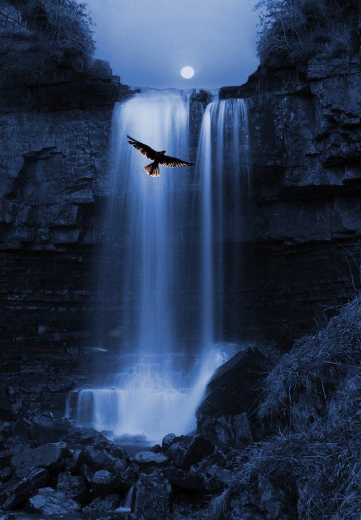 uccello sulle cascatejpg