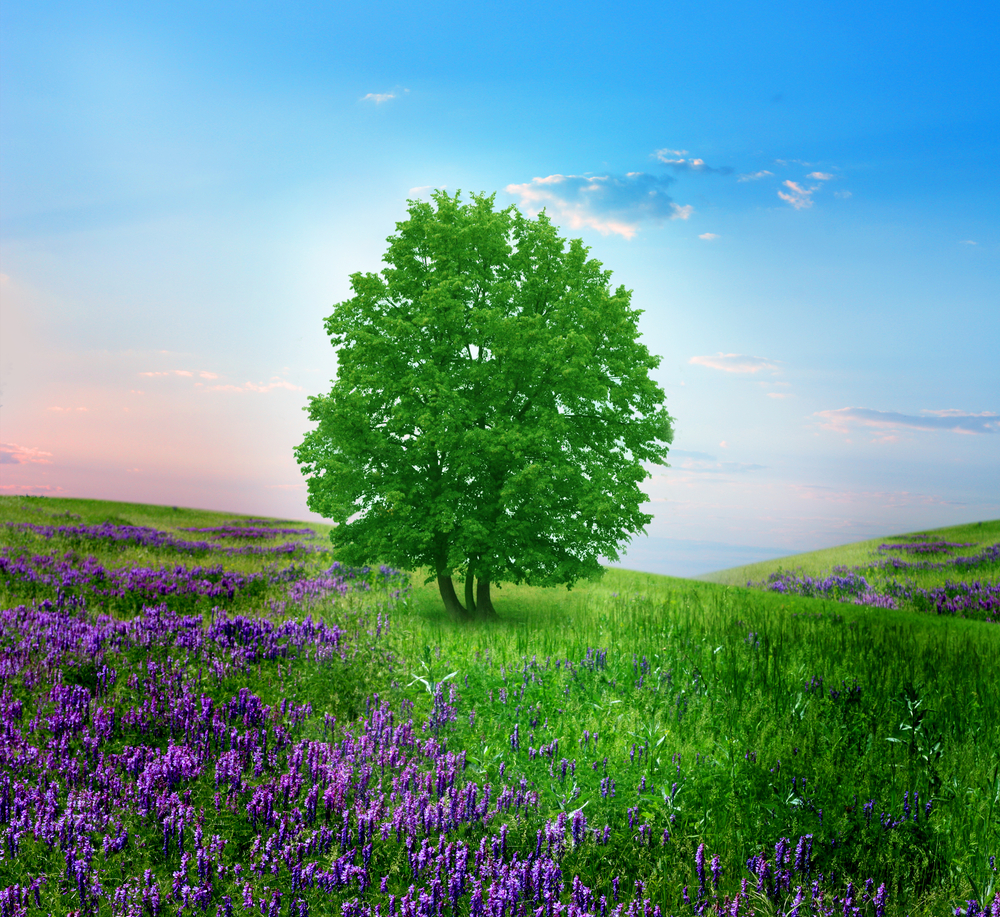 virginia albero9