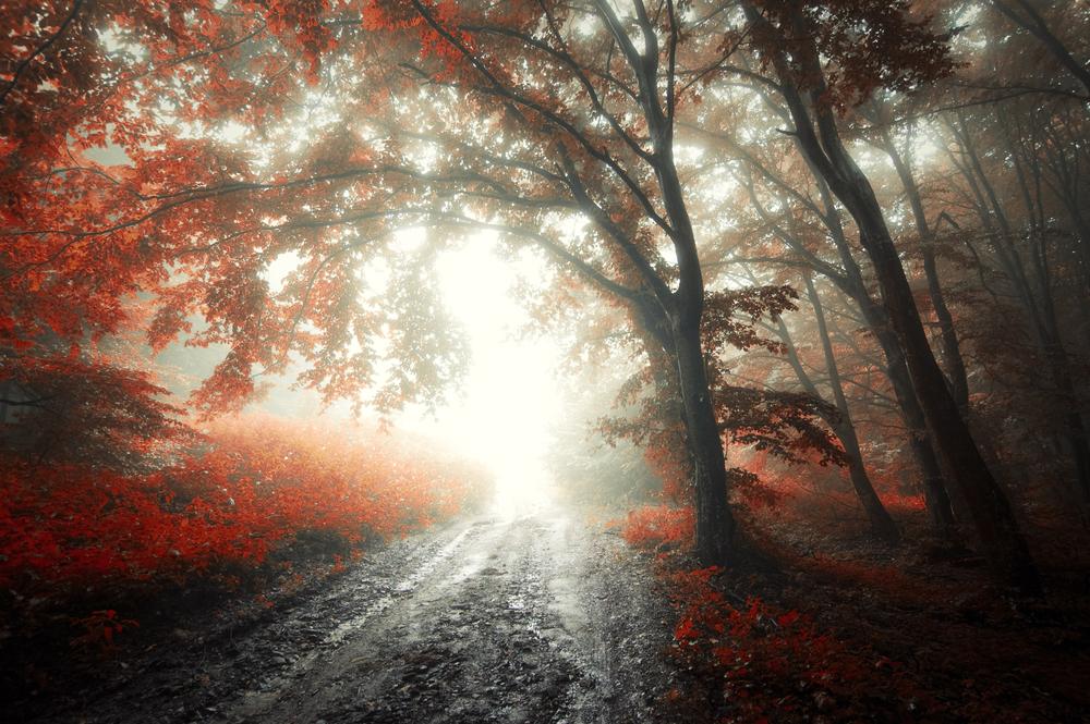 wisconsis nebbia