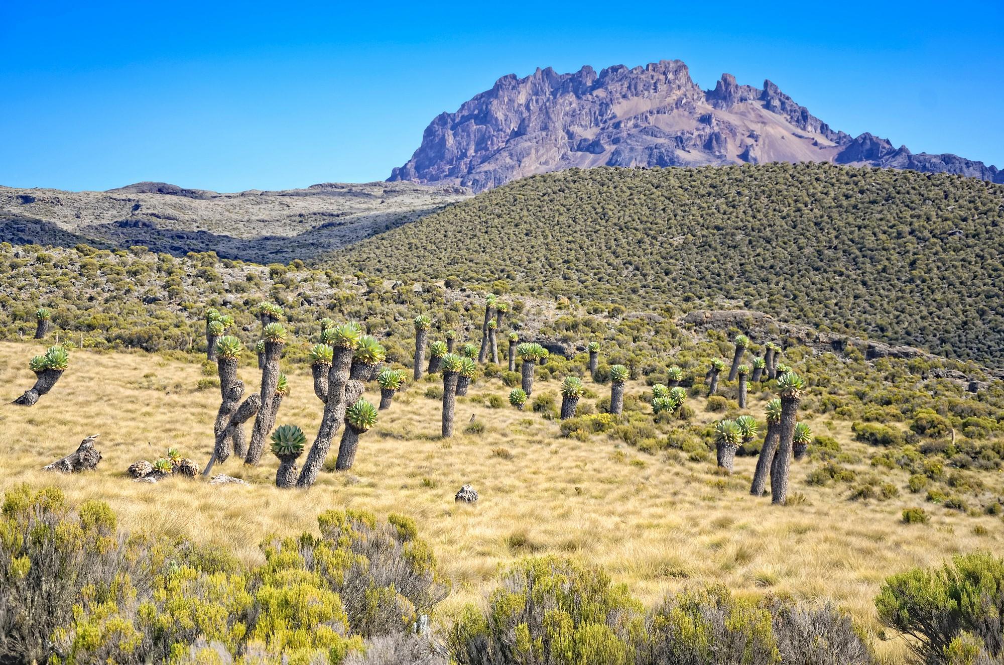 Kilimanjaro : Come arrivare