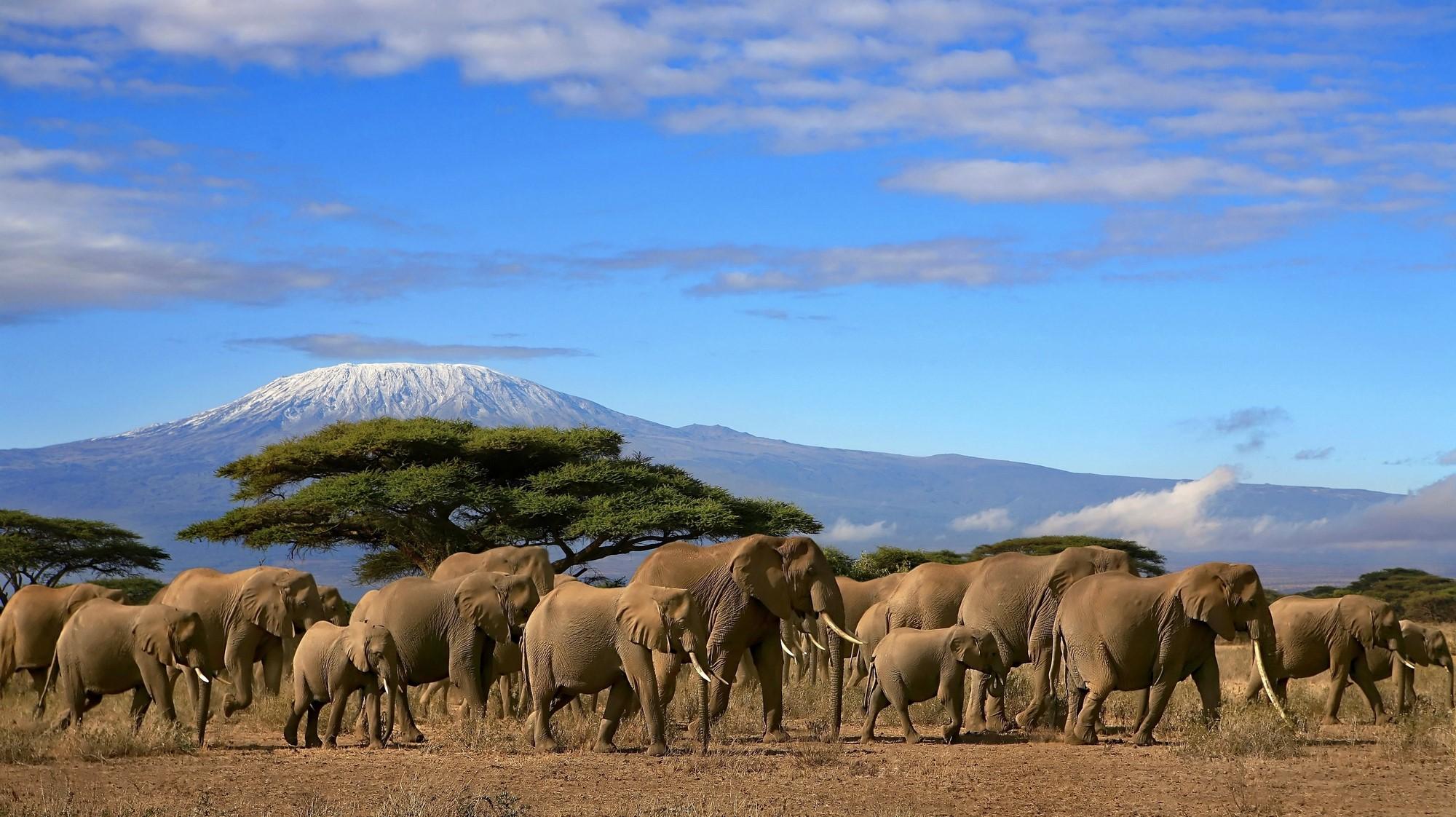 Cibi e bevande del Kilimanjaro